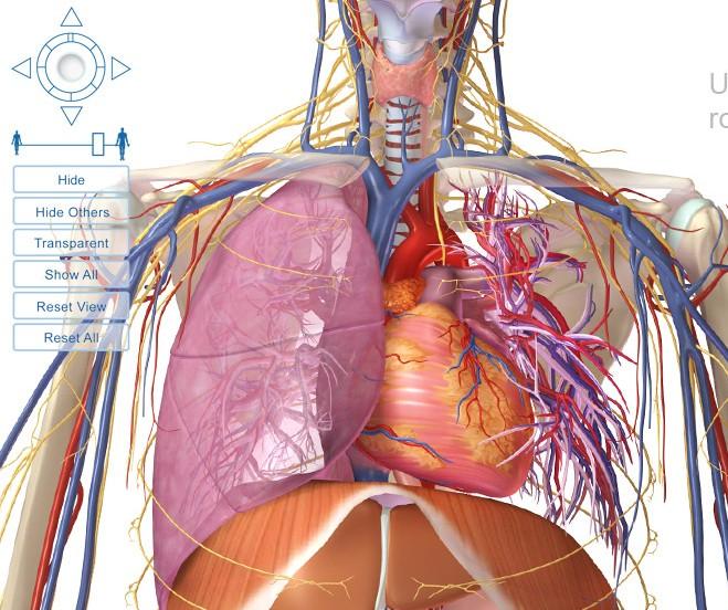 Programas online para conocer el cuerpo humano