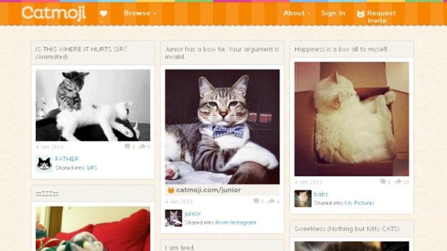 Catmoji, una red social para gatos