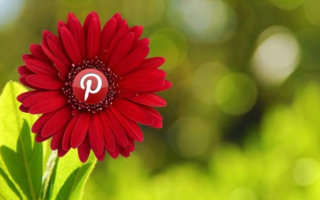 Más del 60% de los usuarios de Pinterest son mujeres