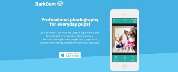 BarkCam, el Instagram para perros
