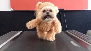 """El """"perro-oso"""" regresa con divertido video de Navidad"""