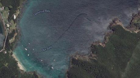 Google Maps encuentra supuesto monstruo marino en Nueva Zelanda